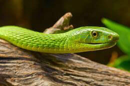 Please Don't Kill Snakes - Gradwell Letting & Management